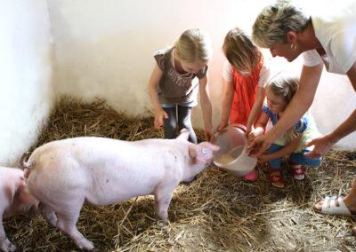Kinder mit Schweinen 1