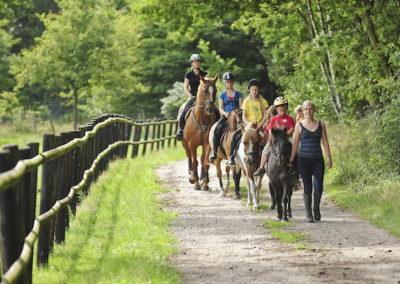 Pension Eichenhof - Umgebung Pferde